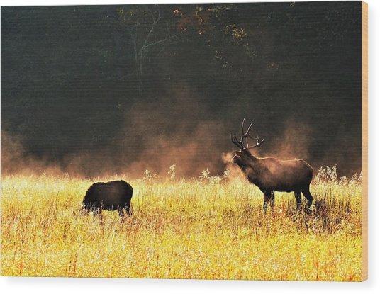 Bull With His Girl Wood Print