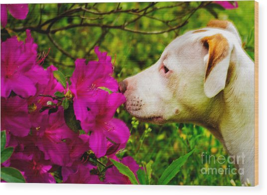 Bulldog Flowers Wood Print