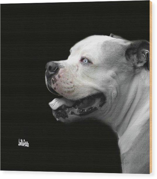 Bulldog Sando  Portrait  Wood Print