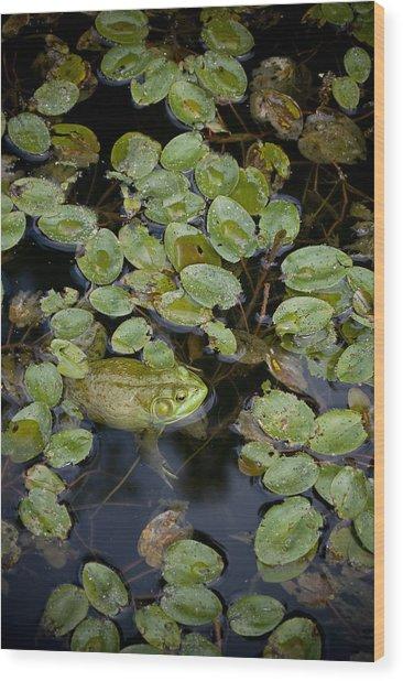 Bullfrog No. 2 - Mystic Connecticut Wood Print by Henry Krauzyk