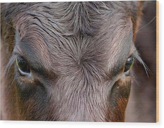 Bull's Eye Wood Print