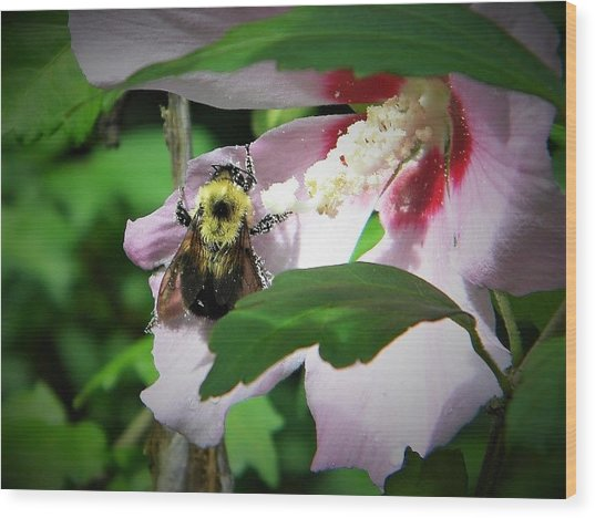 Bumble Bee Gathering Pollen Wood Print
