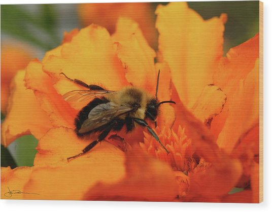 Bumble Orange Wood Print