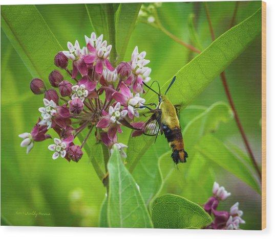 Bumblebee Moth 153 Wood Print