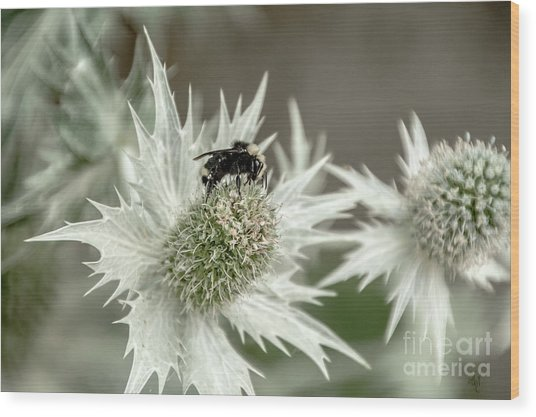 Bumblebee On Thistle Flower Wood Print
