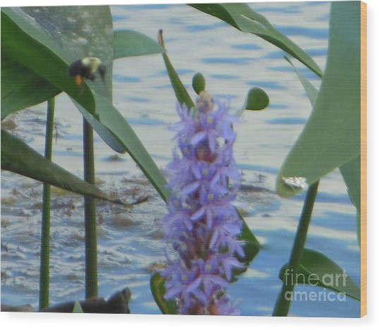 Bumblebee Pickerelweed Moth Wood Print