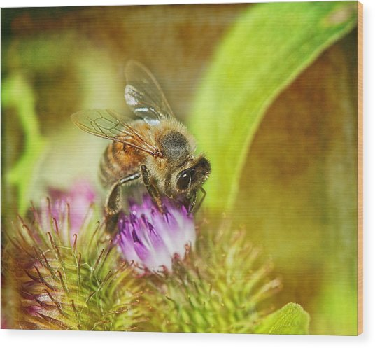 Bumbling Bee Wood Print