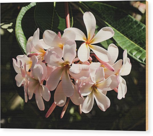 Bunch Of Plumeria Wood Print