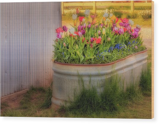 Wood Print featuring the photograph Bunch Of Tulips by Susan Candelario