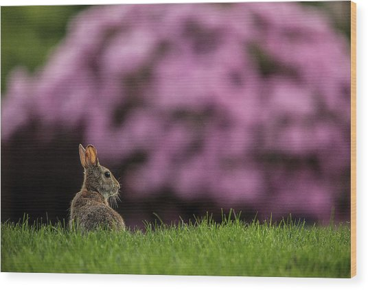 Bunny In The Yard Wood Print