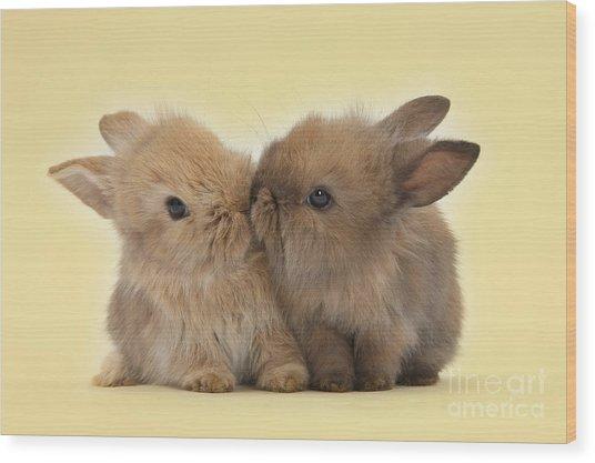 Bunny Kisses Wood Print