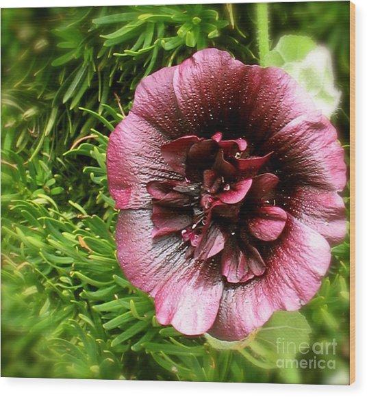 Burgundy Flower Wood Print by Paula Deutz