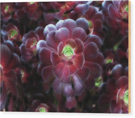 Burgundy Succulenta Wood Print