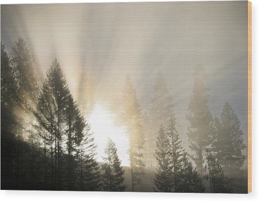 Burning Through The Fog Wood Print