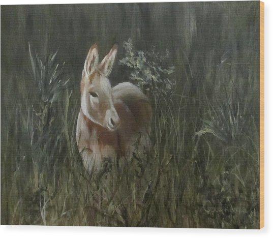 Burro In The Wild Wood Print