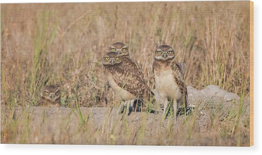 Burrowing Owl Party Wood Print