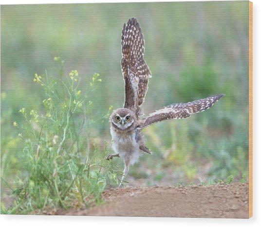 Burrowing Owl Spies Grasshopper Wood Print