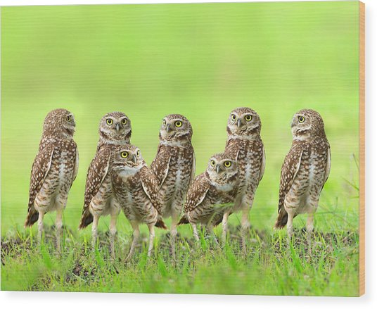 Burrowing Owl Wood Print by Thy Bun