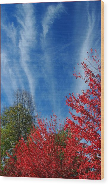 Burst Of Color Wood Print by Gerry Tetz