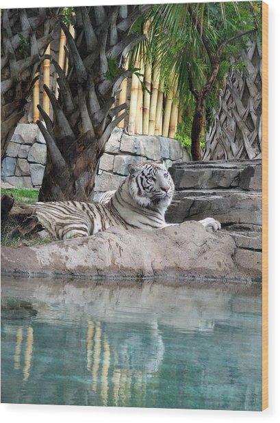 Busch Tiger Wood Print by Wayne Skeen