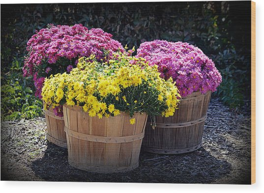 Wood Print featuring the photograph Bushels Of Fall Flowers by AJ Schibig