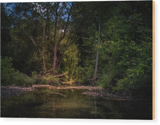 Busiek State Forest Wood Print