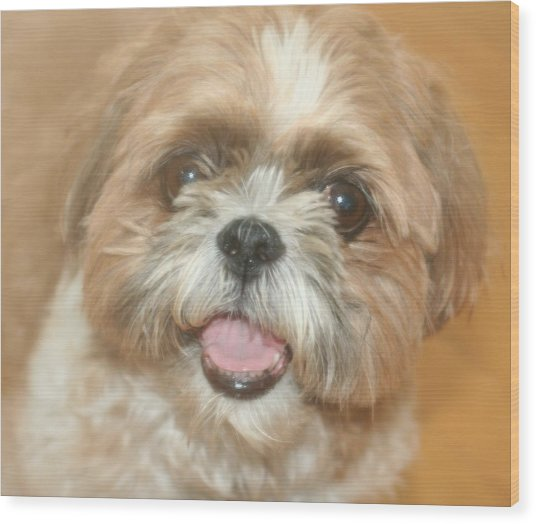 Buster Wood Print by Amy Holmes