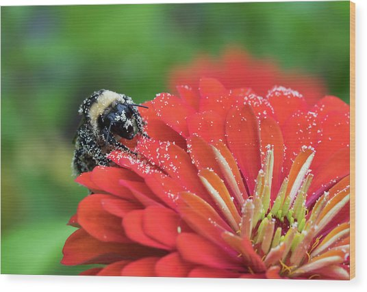 Busy Bee Wood Print by Denise McKay