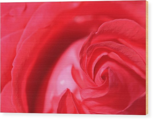 Butler Rose Wood Print