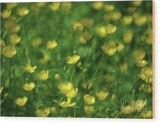 Buttercup Field- Butler Creek Trail- Gresham- Oregon Wood Print