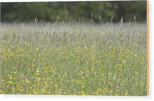 Buttercup Meadow Wood Print
