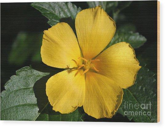 Buttercup Sunshine Wood Print