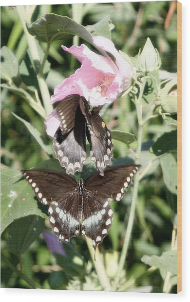 Butterflies Are Free 3 Wood Print