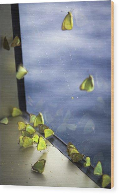 Butterflies At Sea Wood Print