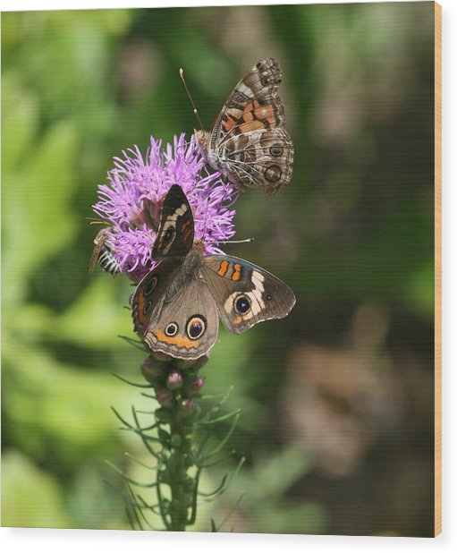 Butterflies And Purple Flower Wood Print