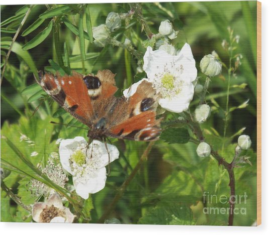Butterflower Wood Print