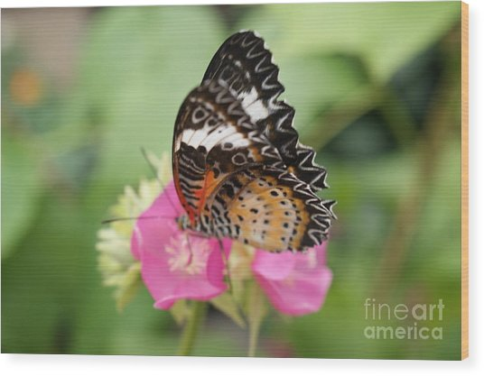 Butterfly 1 Wood Print by Tina McKay-Brown