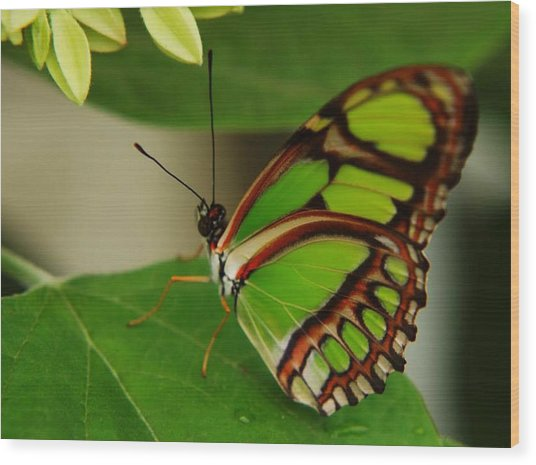 Butterfly 2 Wood Print by Scott Gould