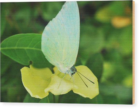 Butterfly 2 Wood Print by Susette Lacsina