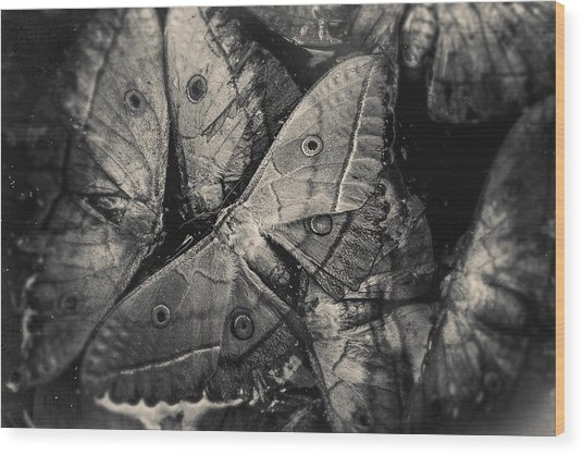 Butterfly #2056 Wood Print