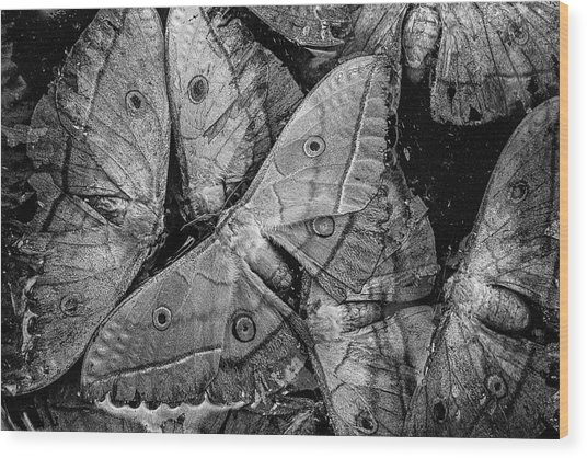 Butterfly #2056 Bw Wood Print