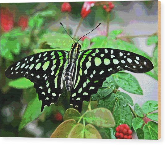 Butterfly 3 Wood Print