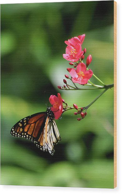 Butterfly And Blossom Wood Print