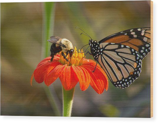 Wood Print featuring the photograph Butterfly And Bumble Bee by Willard Killough III