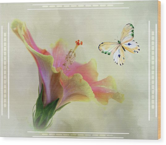 Butterfly And Fiesta Hibiscus Wood Print