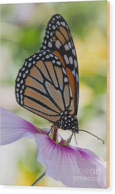 Butterfly And Hibiscus Wood Print