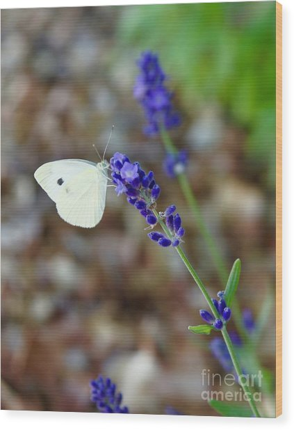Butterfly And Lavender Wood Print