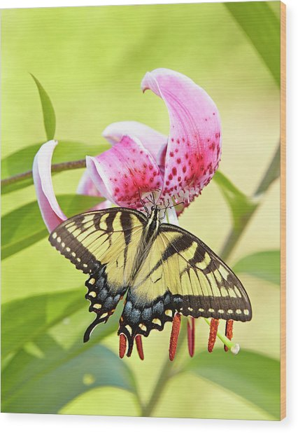 Butterfly And Lily Wood Print