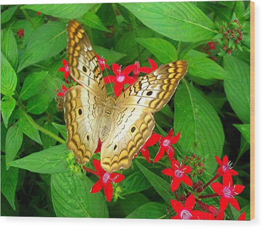 Butterfly And Red Star Sprig Wood Print by Caroline  Urbania Naeem