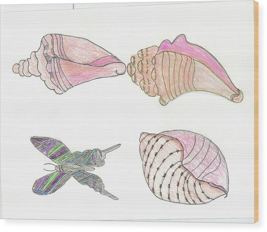 Butterfly And Seashells Wood Print